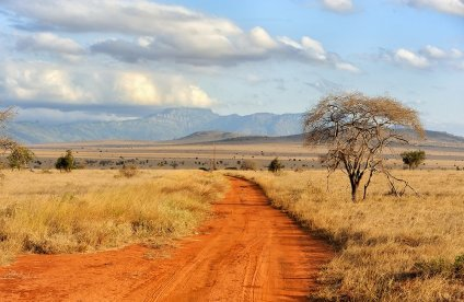 British Ecological Society (BES) Grant for Ecologists in Africa 2021