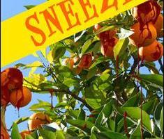 Sneeze By Hank Johnson