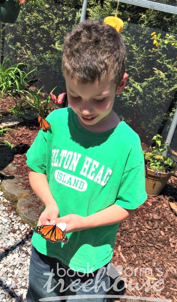 butterfly nature study holding monarch