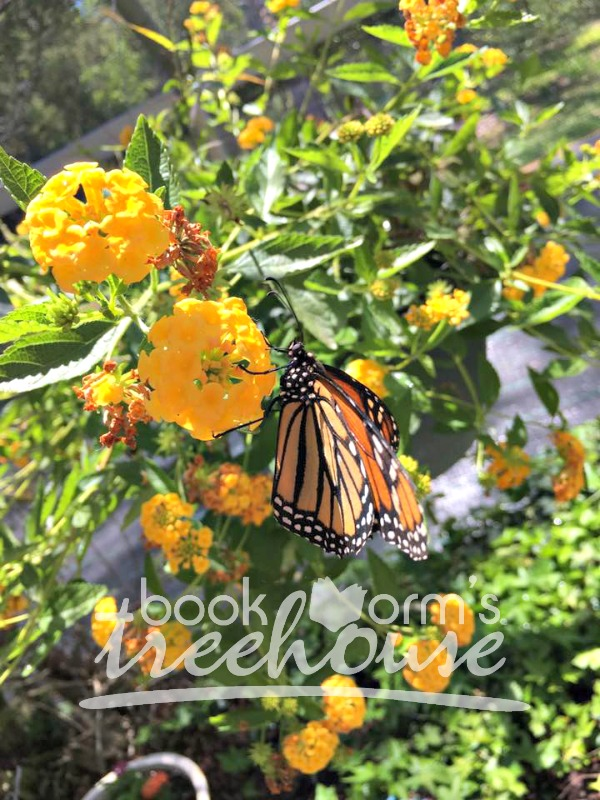Butterfly nature study monarch on flower