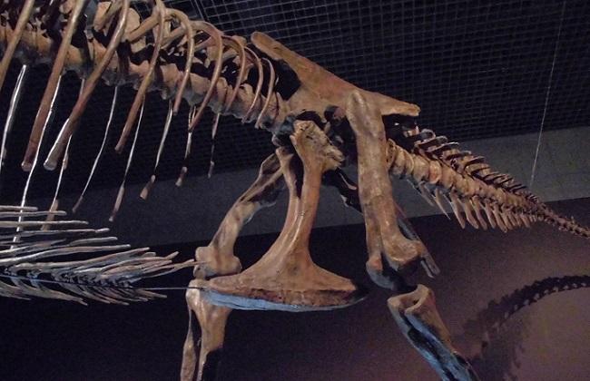 恐竜博2016の様子(ティラノサウルス)