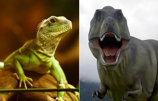 爬虫類と恐竜の違い