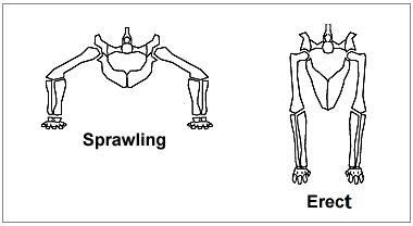 爬虫類と恐竜の脚の違い