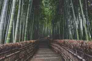 pathway in the middle of bamboo trees