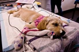 Having a sick pet is heartbreaking and often preventable.