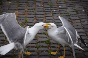 Seagulls or birds? An argument worth having?