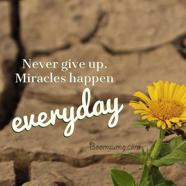 Short Quotes About Life Miracles Happen Everyday Cool Quotes