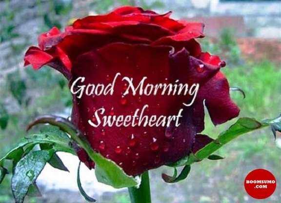 Good Morning Quotes For Her Sweetheart Good Morning My Love