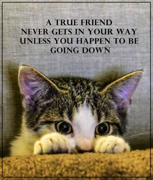 Friendship Quotes Cats: Best Friendship Quotes: A True Friend Never Cross Your