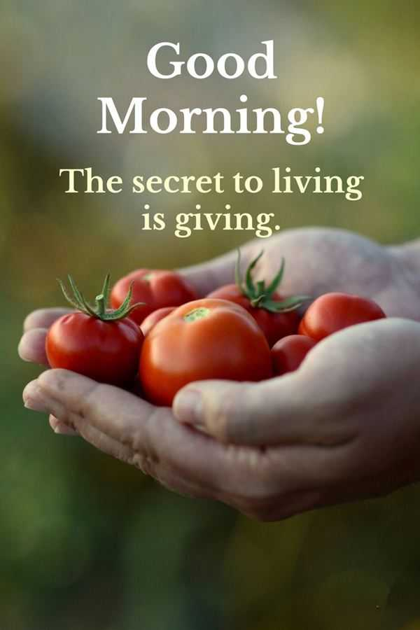 Good Morning Quotes Good Morning Living Is Giving The Secret Of