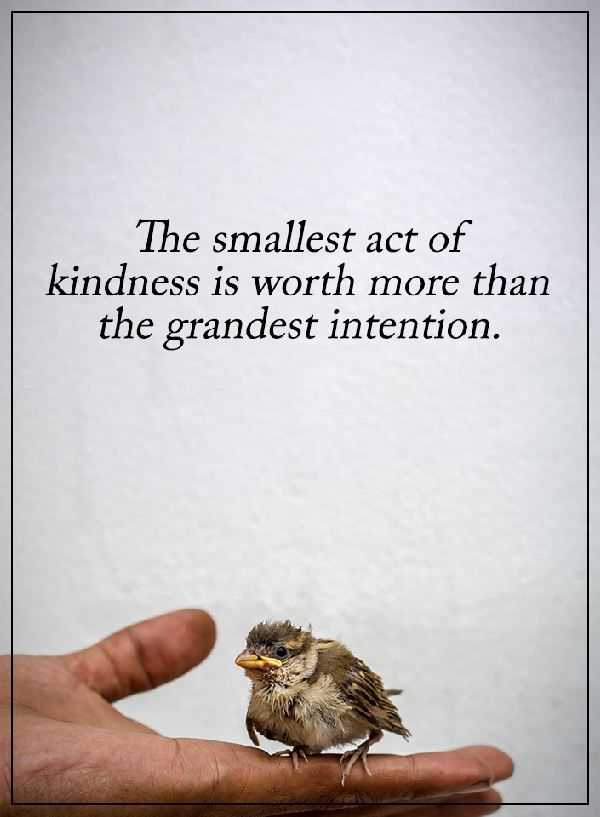 Quotes About Kindness Inspiration Kindness Quotes Why Kindness Worth More Than Grandest Intention