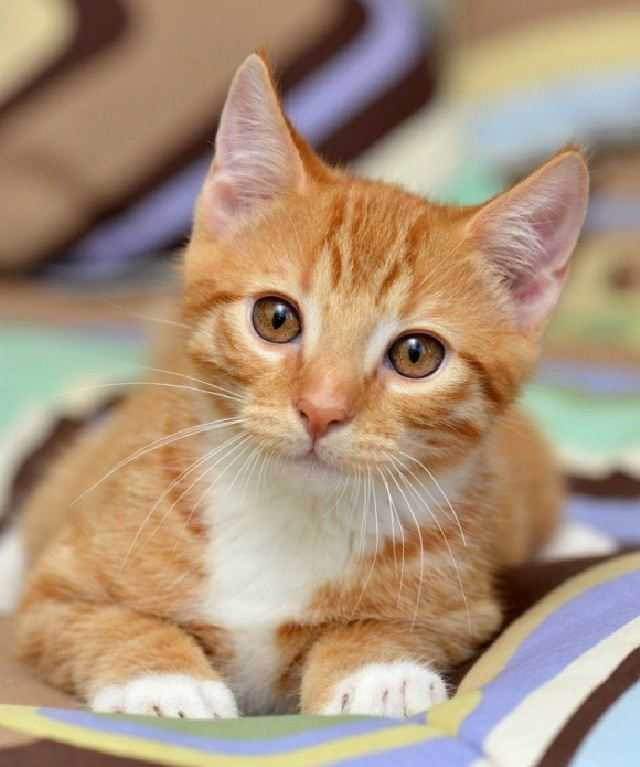 5 Of The Cutest Animal Pics 4
