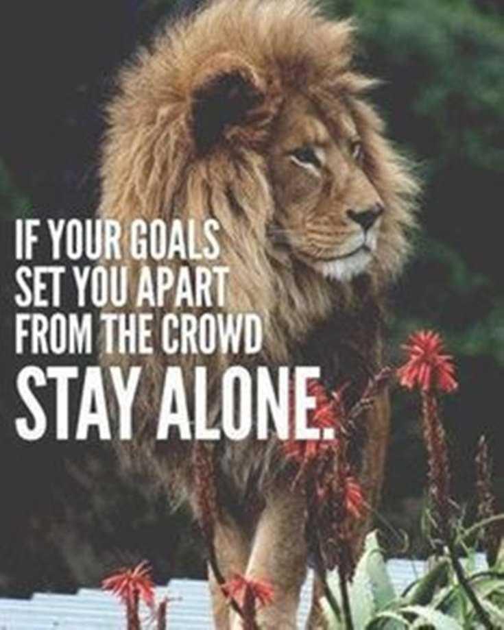 58 Motivational Quotes Quotes About Success 55