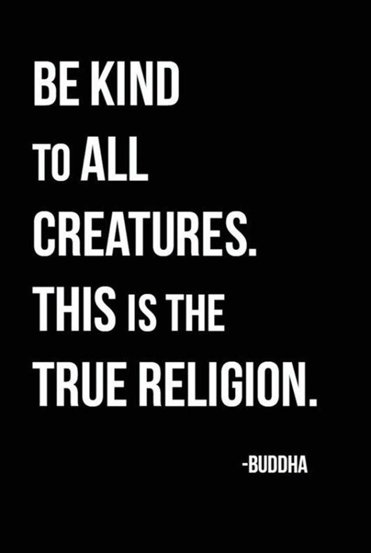 100 Inspirational Buddha Quotes And Sayings 9