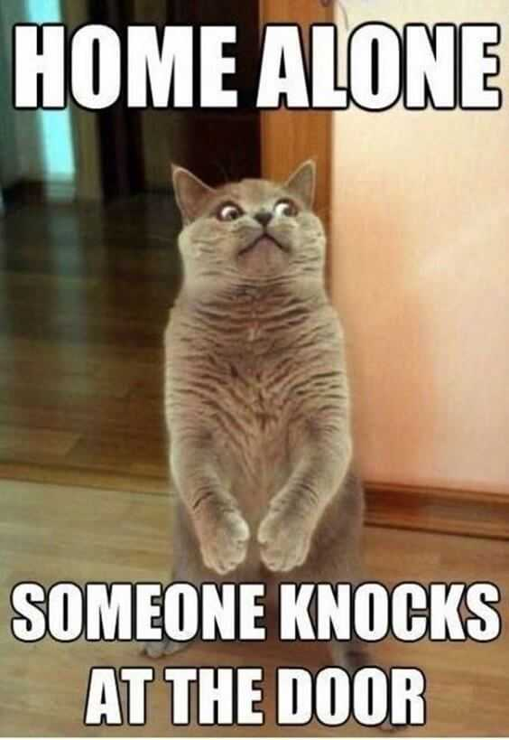28 Funny Animal Memes With Captions and Funny Pictures 1
