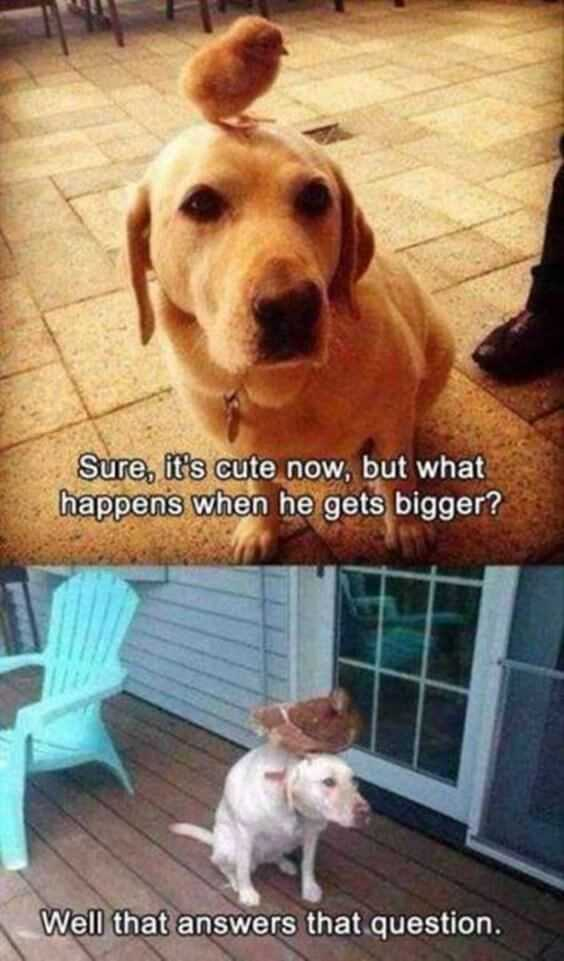 28 Funny Animal Memes With Captions and Funny Pictures 27