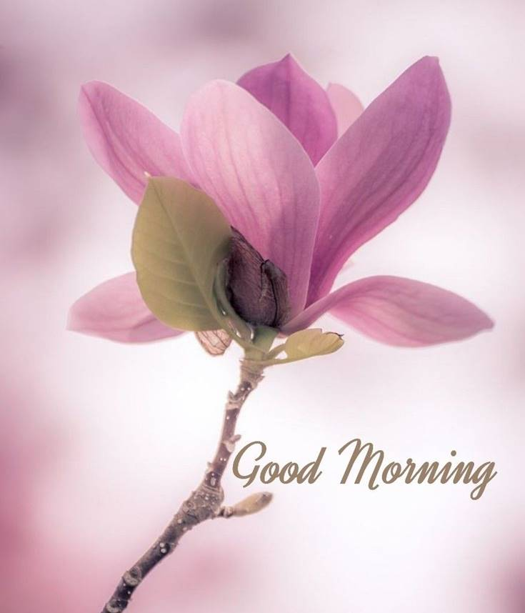 56 Best Good Morning Flowers images 10