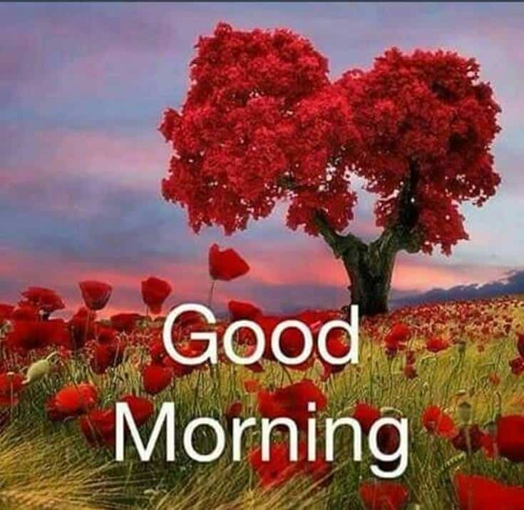 Good Morning Flowers images 19