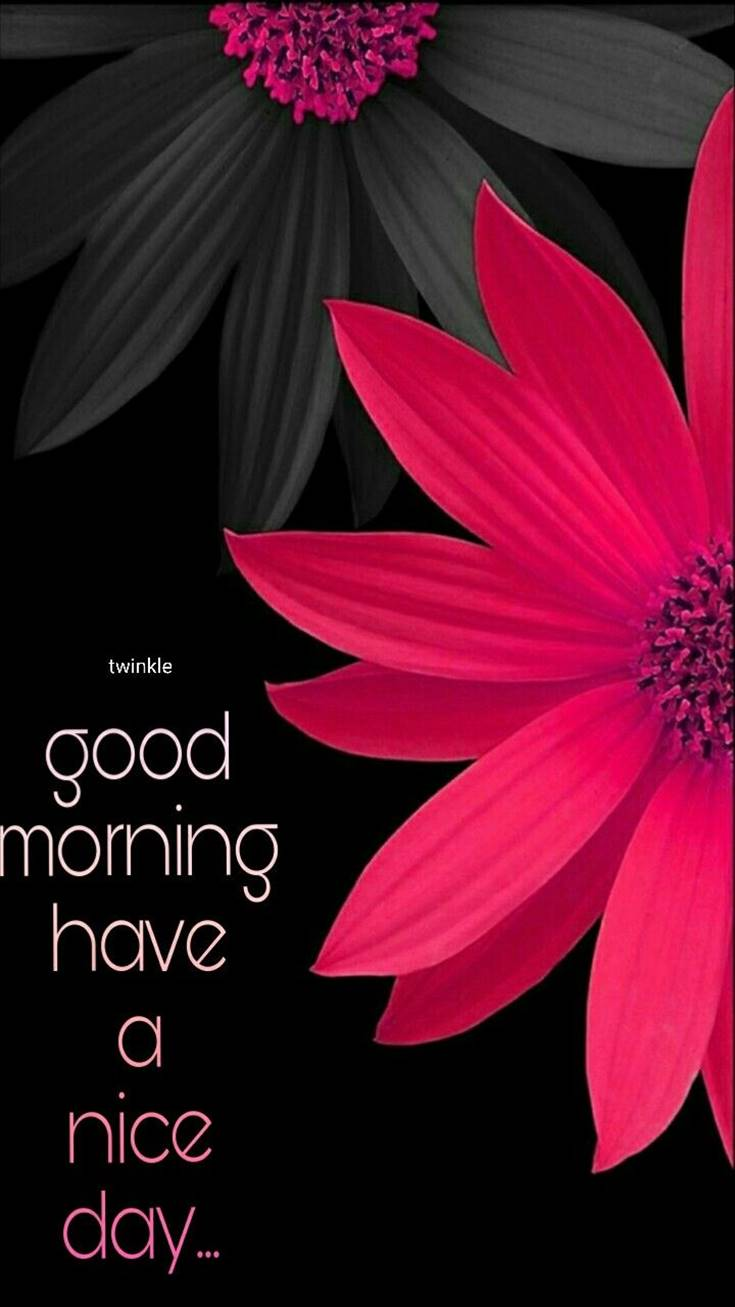 Good Morning Flowers images and Nice day