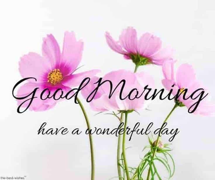 Good Morning Flowers images Wonderful day