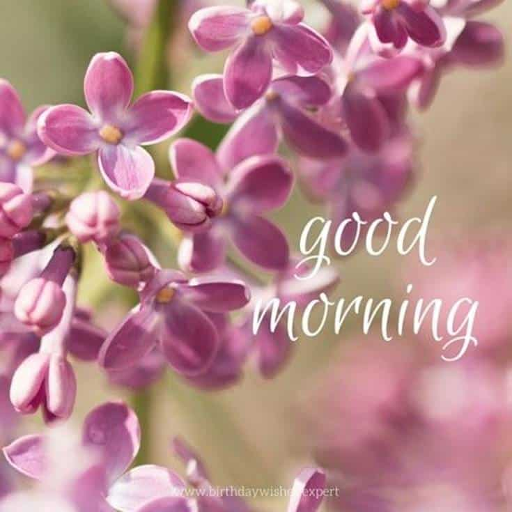 Good Morning Flowers daily images