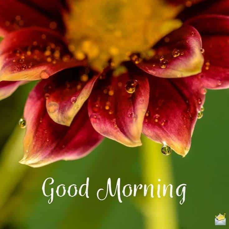 Marvel Good Morning Pictures and Flowers image