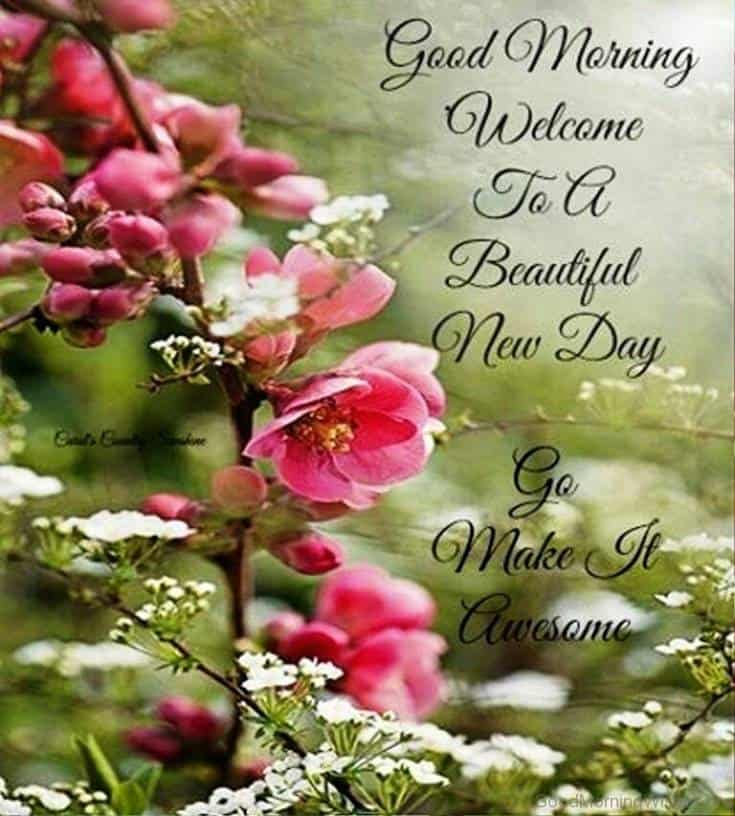 Good Morning beautiful new day quotes