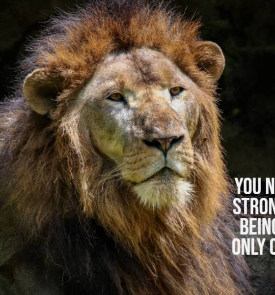 Be Strong Quotes About Strength – Never Give Up