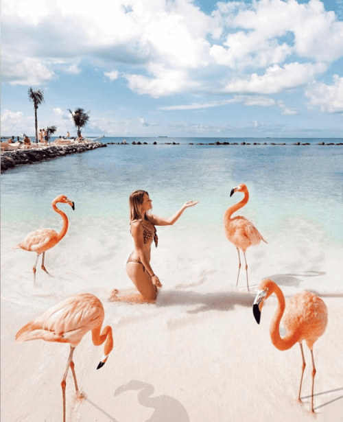A woman feeding the flamingos in Aruba
