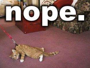 Plans, Nope Says Kitten