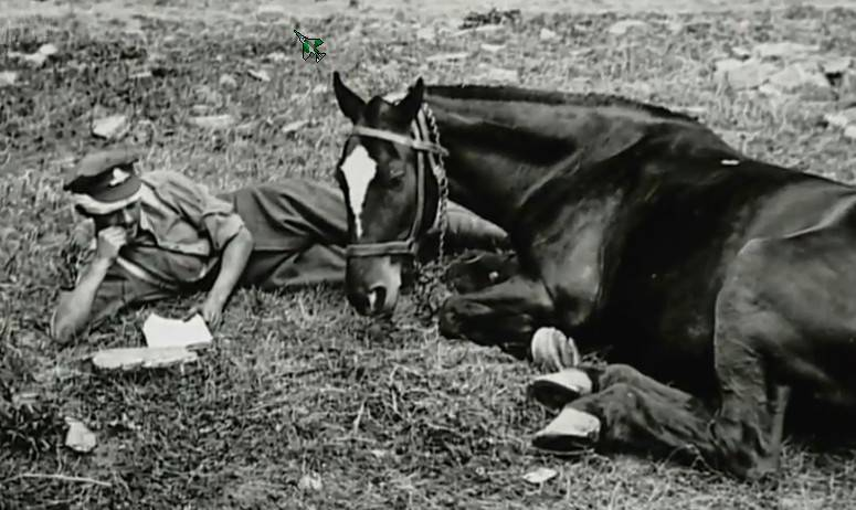 the history and importance of horses in australia Further, it is a functionally important species, notably due to its ability to  eurasia , africa, and australia and, combined with habitat mapping, revealed  despite  the historical range collapse, wild-living horses are today found.