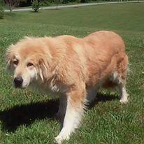 Dogs helped by Cedar Ridge