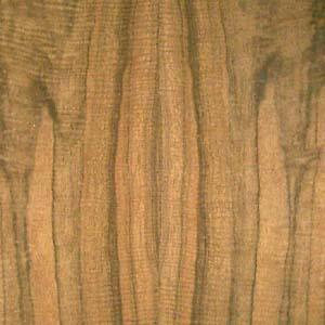 laurel-east-Indian-fc-fig-2