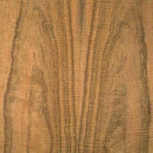 laurel-east-Indian-fc-fig