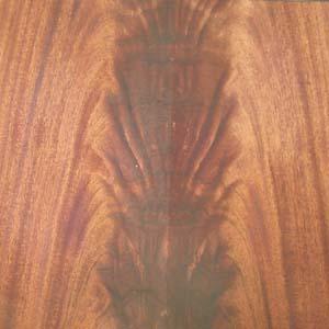 mahogany-crotch-2