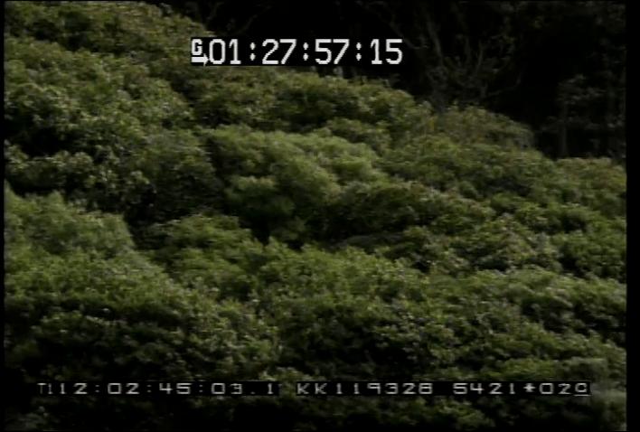 vlcsnap-2020-05-18-02h03m16s236
