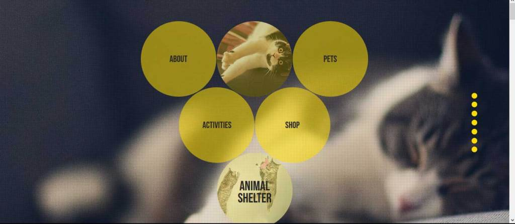 animal shelter : themes pour site d'animaux
