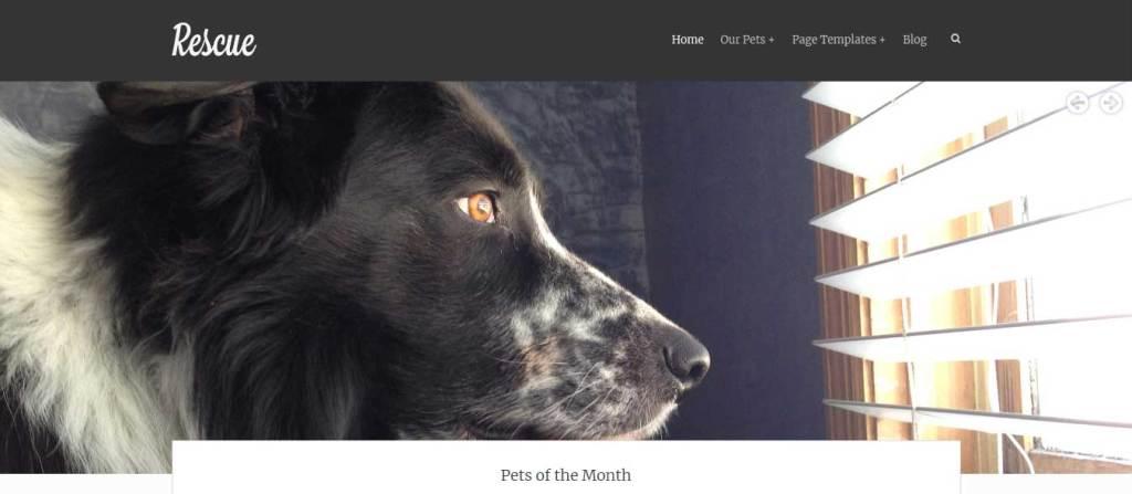 rescue : themes pour site d'animaux