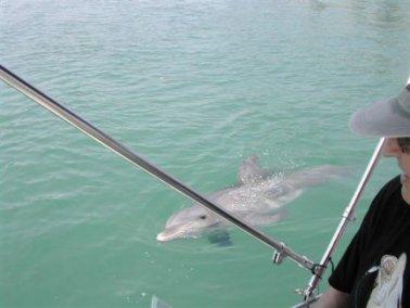 dolphin-neben-Boot