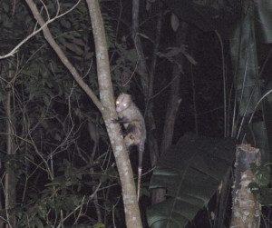 One of the many animals roaming the backyard