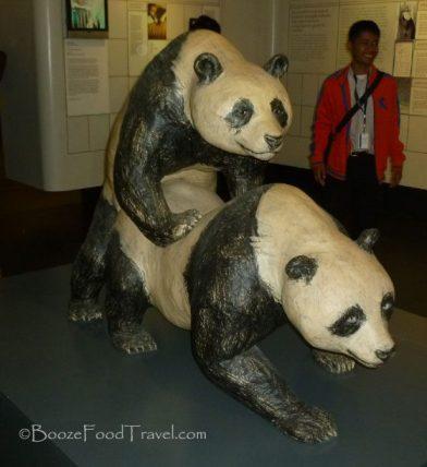 Because everyone needs to see some panda porn