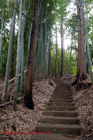 The stairs through the bamboo forest