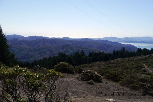 From the trail in Mt. Tamalpais State Park