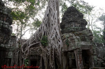 Visiting Ta Prohm is the closest I'll get to Angelina Jolie