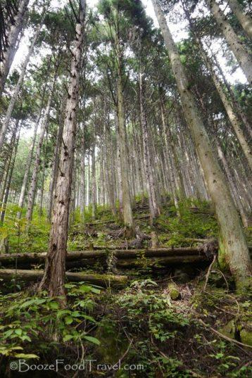 mitake-forest