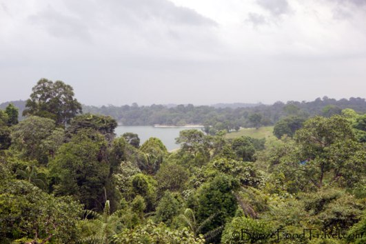 View from the TreeTop Walk