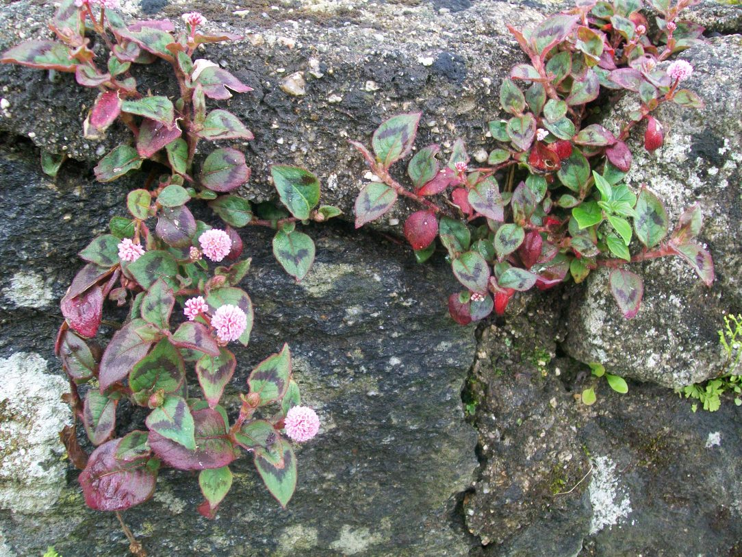 Plants growing for rocks - inspiration for being alcohol free