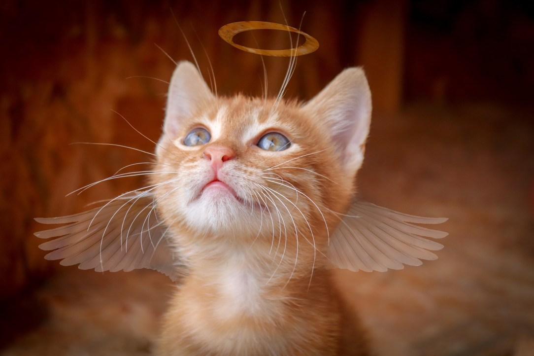 Angelical cat, related to Alcohol Free humour