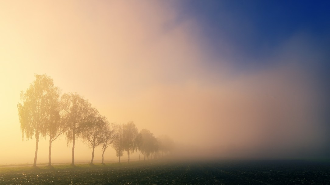 Trees & morning fog, sobriety inspiration