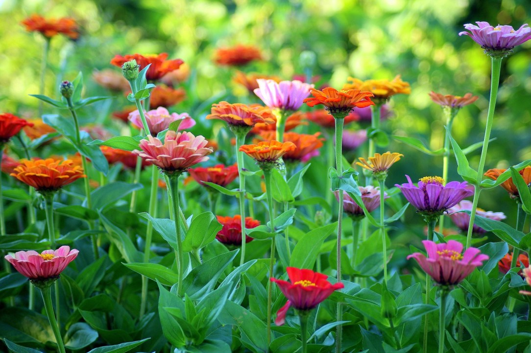 Colorful flowers, inspiration for doing a Mocktail